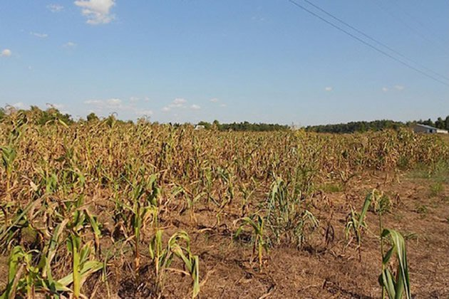 El Nino event will drive up need for food aid in Zimbabwe