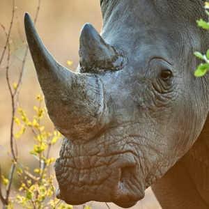 Lucky rhino mum 'survives attack in Zimbabwe'