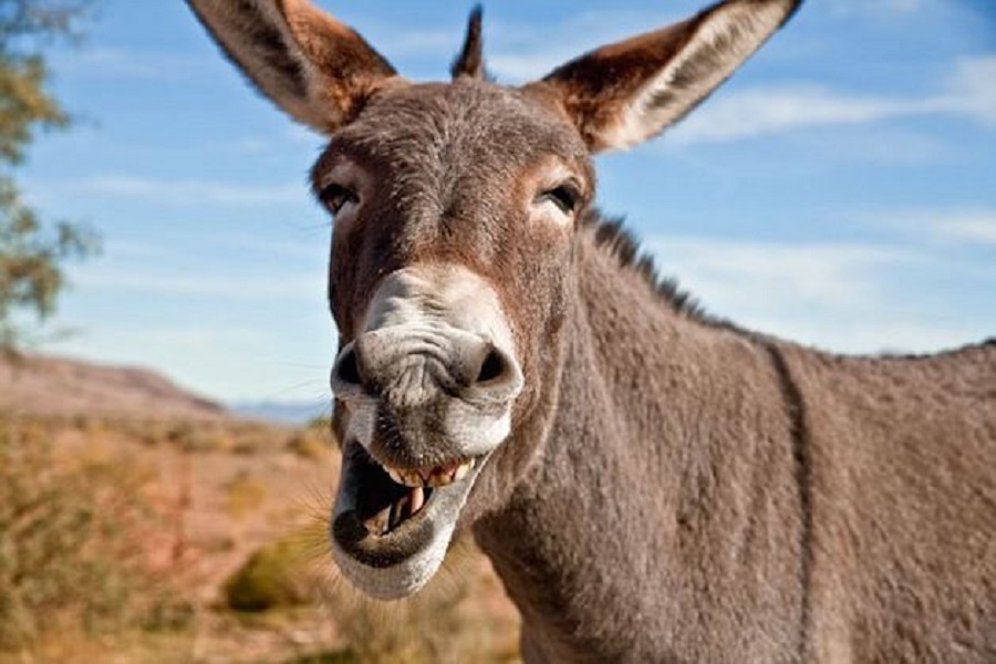 Zim sets up first donkey abattoir . . . 70 beasts of burden to be slaughtered, dressed per day