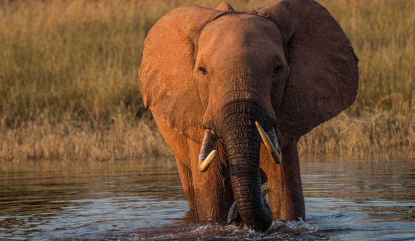 Zimbabwe: Selling elephants to questionable Chinese destinations damages country's tourism, say critics