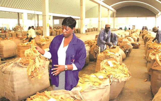 Tobacco exports marginally lower