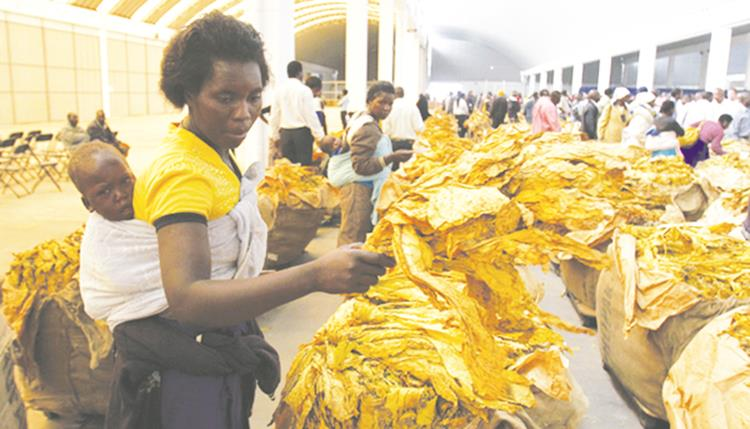 Tobacco export earnings top $100 million
