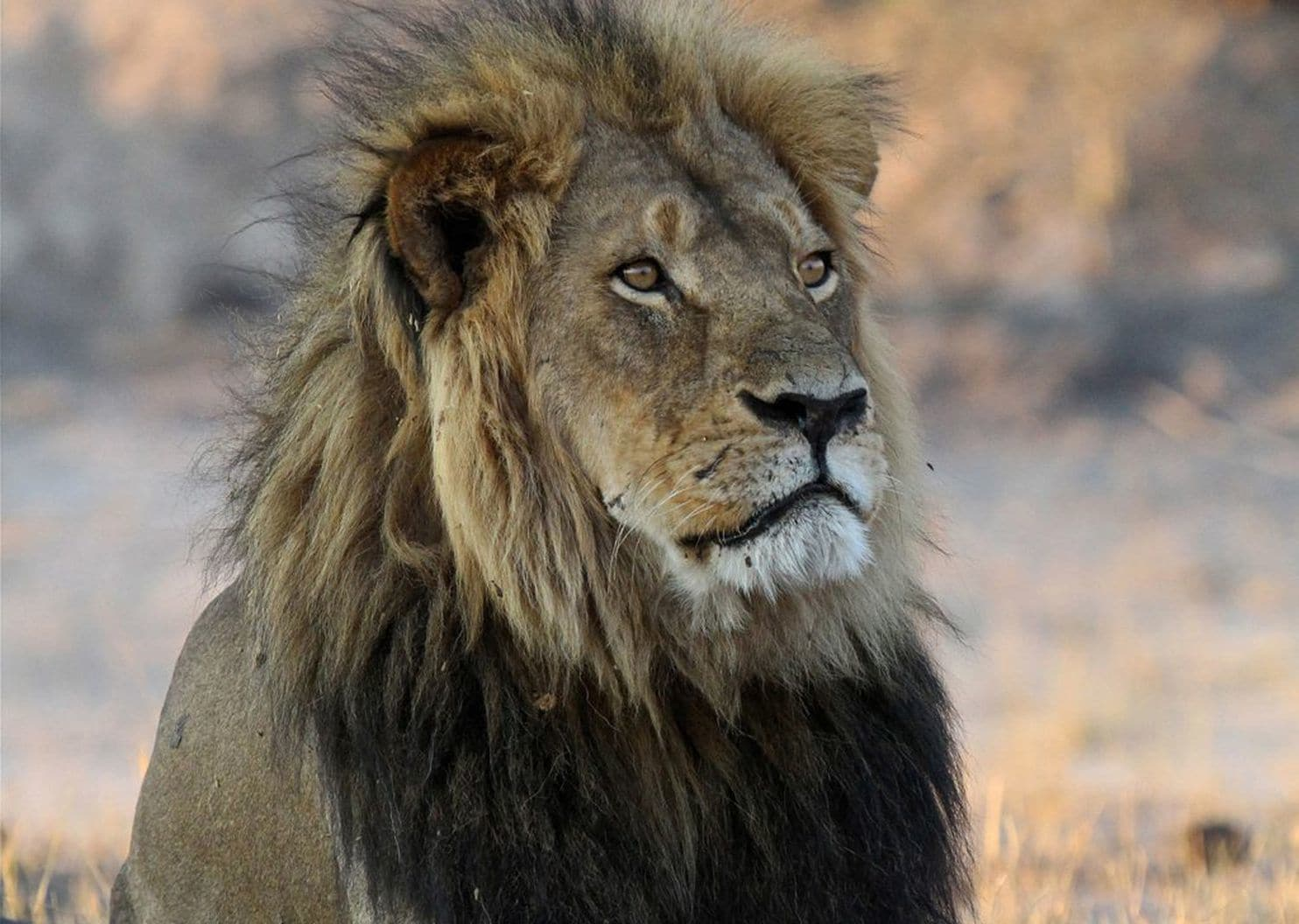 Cecil the lion 'suffered incredible cruelty for at least 10 hours,' new book says
