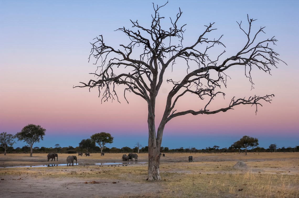 New beginnings: Zimbabwe, back from the brink
