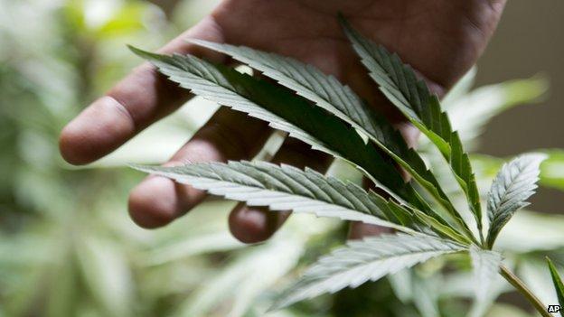 Mixed reactions over Mbanje legalisation