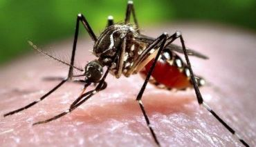 Malaria on rise in Zim