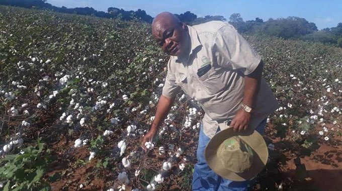 Zimbabwe urged to adopt new cotton varieties