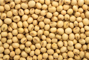 VAT on soyabeans affecting production