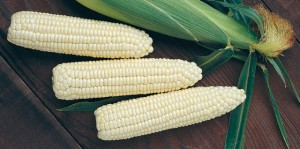 Zim spends fortune on maize imports