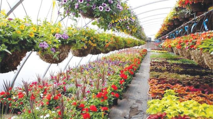 Horticulture set to surpass $143m