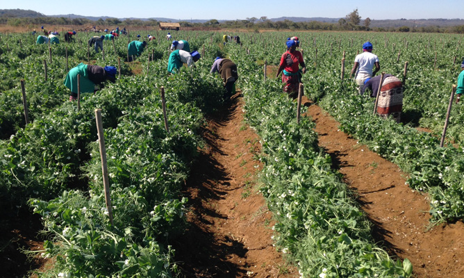 Farm workers get $5 salary increment