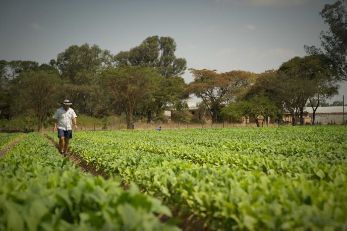 Zimbabwe's white farmers consider returning years after brutal land seizures