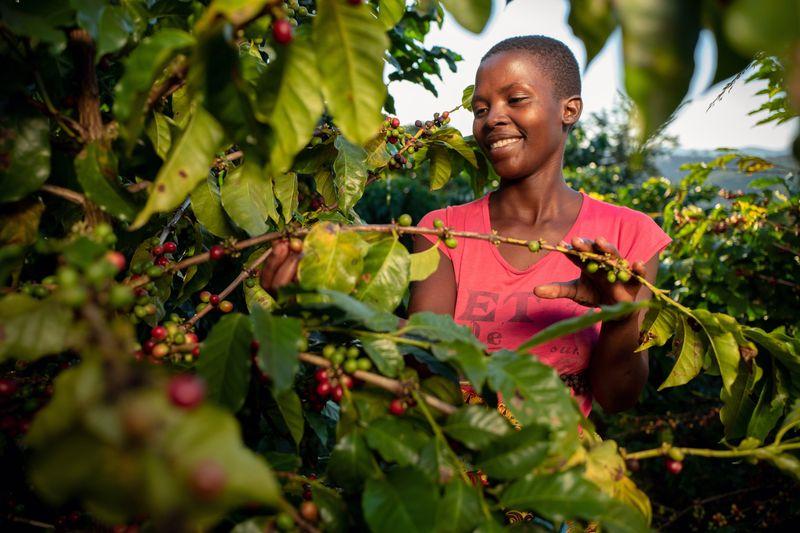 The Latest Hip African Coffee? Nespresso Says It's Zimbabwe Brew
