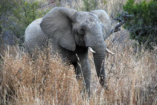Second German tourist attacked by elephant in Zimbabwe