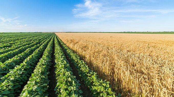 Land audit gets underway