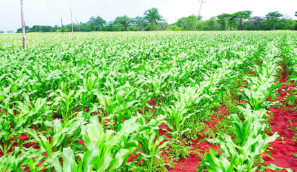 Agro sector gets 15pc salary raise