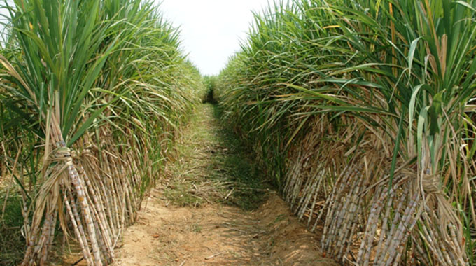 Forex deal boon for cane growers
