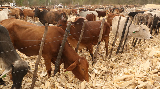 Livestock industry: Beacon of food production