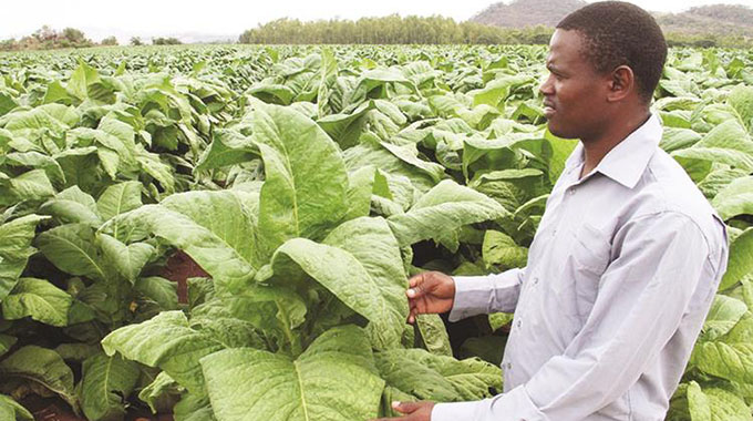 Tobacco exports up by over 360 pc