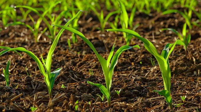 Midlands farmers replant third time