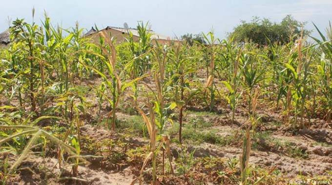 Drought: Why Zim needs financial bailout for farmers