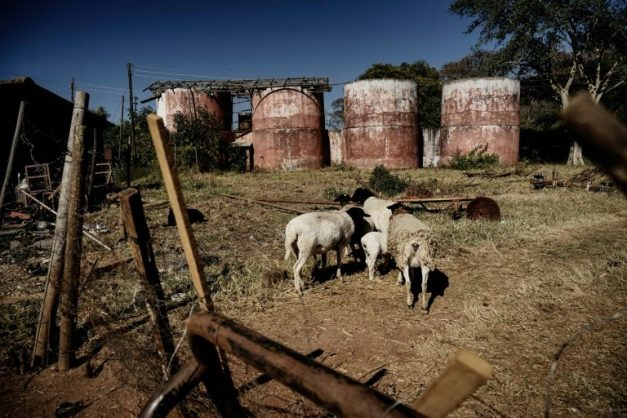 Critics blame the forced evictions of white farmers for a collapse in Zimbabwe's agricultural production . Picture: AFP / ZINYANGE AUNTONY