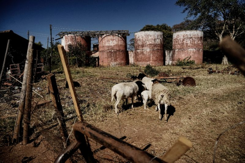 Critics blame the forced evictions of white farmers for a collapse in Zimbabwe's agricultural production (AFP Photo/ZINYANGE AUNTONY)