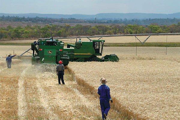 wheat-harvesting1.jpg