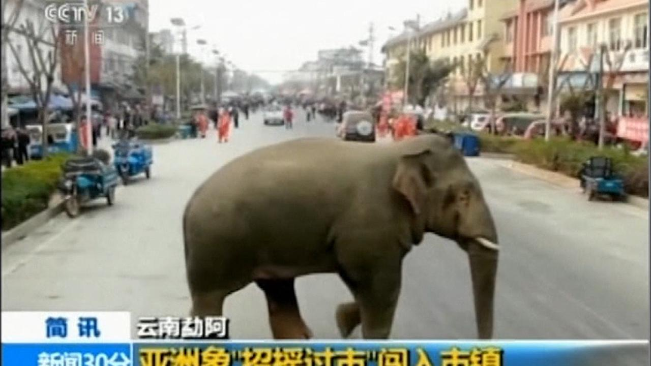 Wild elephant wanders through town in China