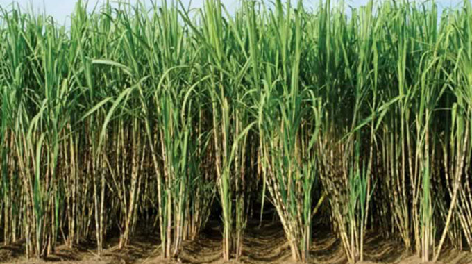 Sugarcane growers await forex payments
