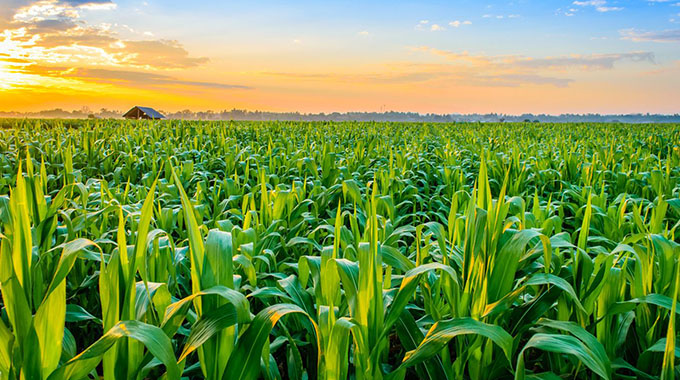 African co-operation benefits agric sector