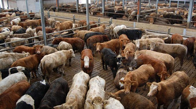 Beef canning co-operative seeks US$1million