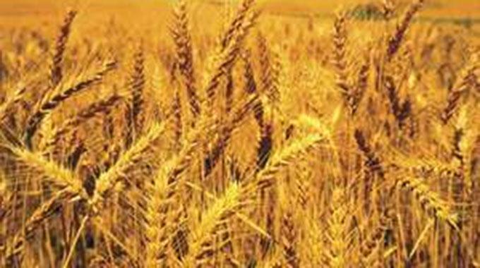 Zim misses winter wheat production target