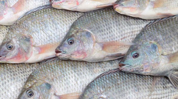 Zim: Sadc's potential biggest fish producer