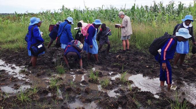 Wetlands key to Zim's biodiversity