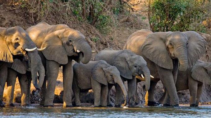 Gwanda South rural farmers struggle to keep elephants away