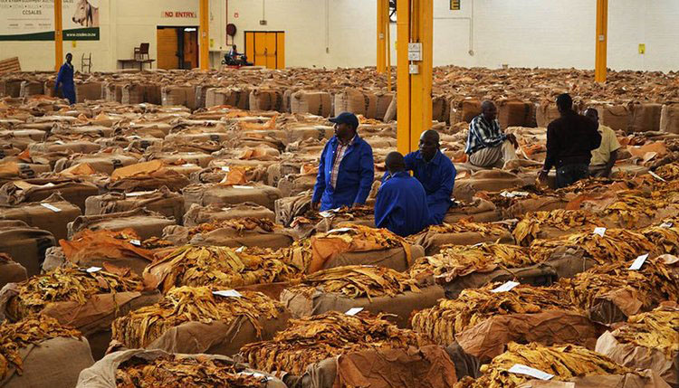 Tobacco deliveries near another record