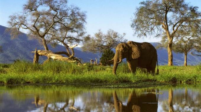 Elephant protection to dominate Cites meeting