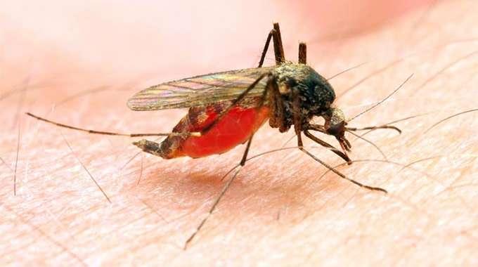 Malaria kills 66