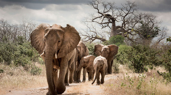 It's time to break the deadlock over Africa's ivory trade: Here's how . . .