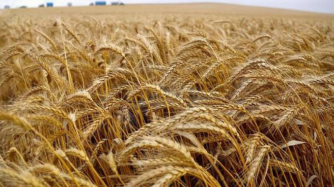 Govt tightens wheat subsidy facility