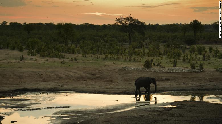 An elephant is pictured in Zimbabwe's Hwange National Park in November 2012.