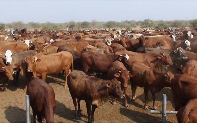 BREAKING NEWS: Cattle, goats, pigs imports banned