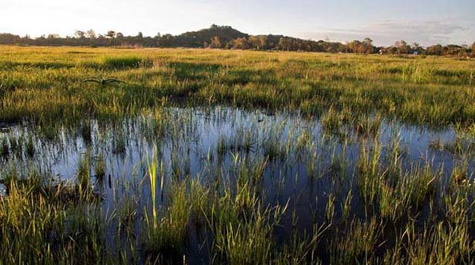 Wetlands crucial in biodiversity protection