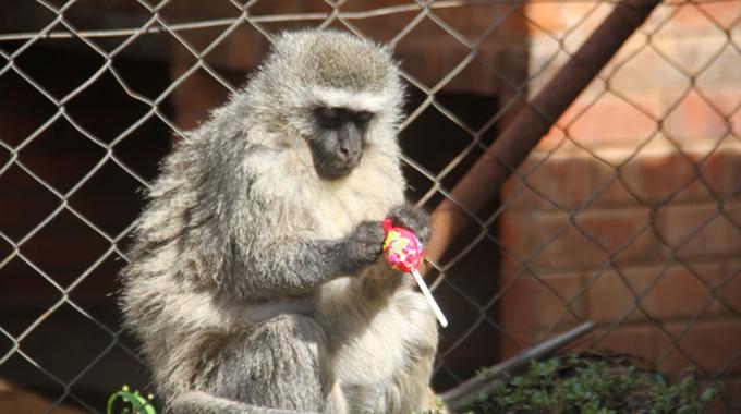 Harare Garden's unusual resident