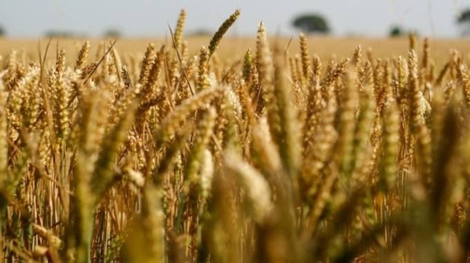 Big target for winter wheat