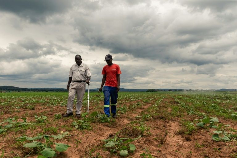 For Zimbabwean farmers like Benard Chinyemba (L), 60, a qualified mechanical engineer who was offered a farm during Zimbabwe's land reform, the programme is a success (AFP Photo/Jekesai NJIKIZANA)