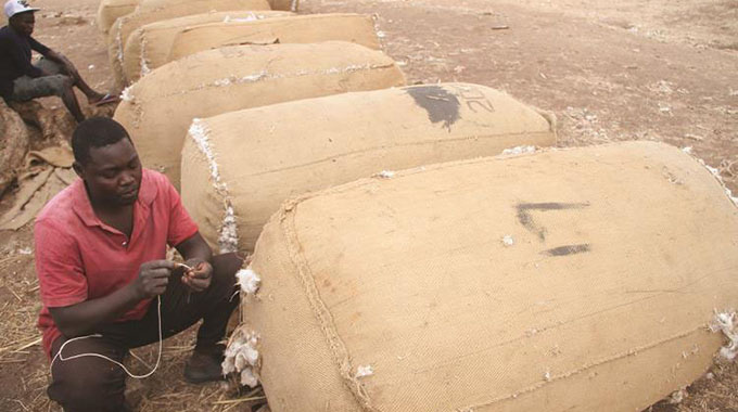 Cotton farmers switch to bank accounts