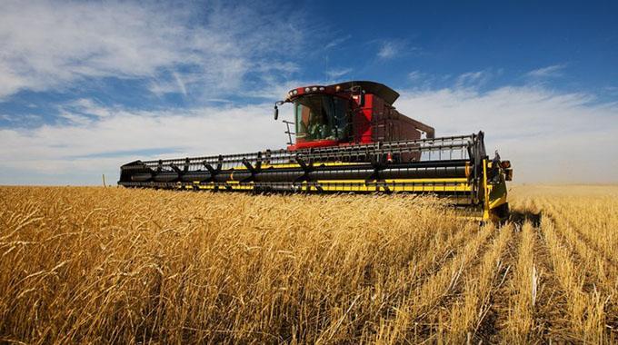 Wheat farmers eye bumper harvest