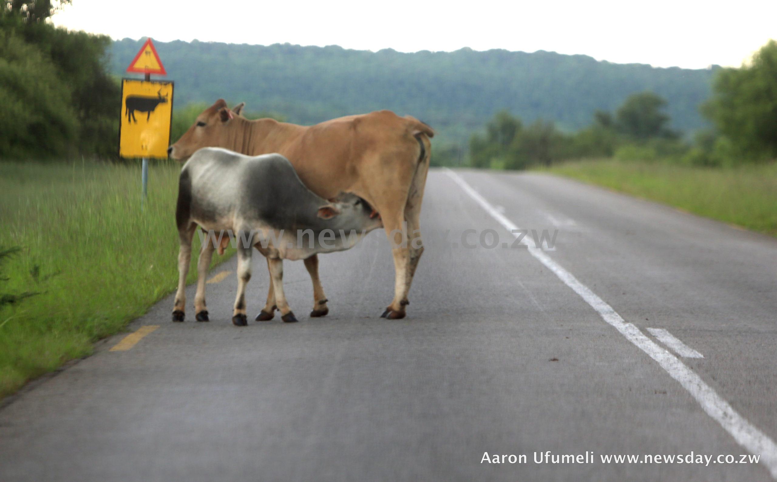Milk production slumps